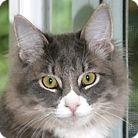 Adopt A Pet :: Floyd - Port Angeles, WA