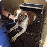 Adopt A Pet :: Duke - Laingsburg, MI