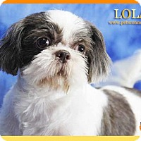 Adopt A Pet :: Lola - South Bend, IN