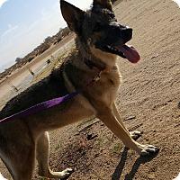Adopt A Pet :: Scarlett - Victorville, CA