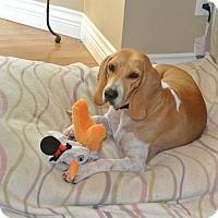 Adopt A Pet :: Lulu - Surrey, BC