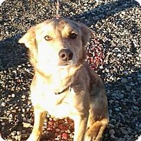 Adopt A Pet :: Ella - Littleton, CO