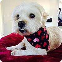 Adopt A Pet :: Larry-ADOPT Me! - Redondo Beach, CA
