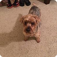 Adopt A Pet :: Carson - Lorain, OH