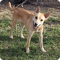 Adopt A Pet :: Leah Lou Ann - Staunton, VA