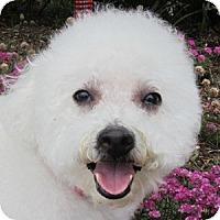 Adopt A Pet :: Lucky - La Costa, CA