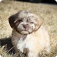 Adopt A Pet :: Winda - Broomfield, CO