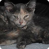 Adopt A Pet :: Daphne - Paintsville, KY