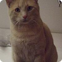 Adopt A Pet :: Jordan - Colorado Springs, CO