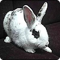 Adopt A Pet :: Addison - Williston, FL