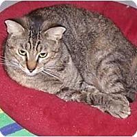 Adopt A Pet :: Lady Emily - Huffman, TX