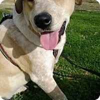 Adopt A Pet :: Max - Only $25 adoption!!! - Litchfield Park, AZ