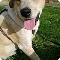 Adopt A Pet :: Max - Only $25 adoption!!! - Litchfield Park, AZ