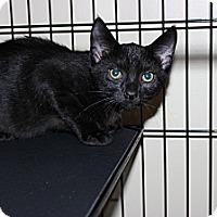 Adopt A Pet :: Skylar - Secaucus, NJ