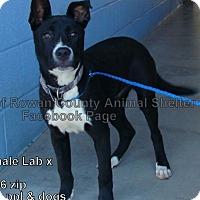 Adopt A Pet :: Tippy - Bardonia, NY