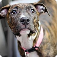 Adopt A Pet :: Jade - Reisterstown, MD