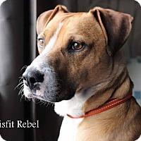 Adopt A Pet :: Rebel - Eastpointe, MI