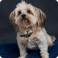 Adopt A Pet :: Tory - Nuevo, CA