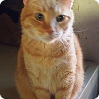 Adopt A Pet :: Mickey - Pasadena, CA