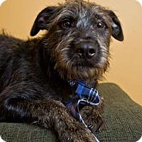 Adopt A Pet :: Jake - Pearland, TX