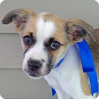 Adopt A Pet :: Ralph - Baton Rouge, LA