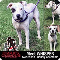 Adopt A Pet :: Whisper - Spring City, PA