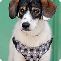 Adopt A Pet :: Sparky - Pottsville, PA