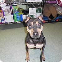 Adopt A Pet :: Raznikov - Seattle, WA
