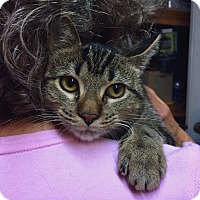 Adopt A Pet :: Columbine - Lombard, IL