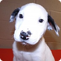 Adopt A Pet :: Sinbad - Oxford, MS