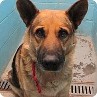 Adopt A Pet :: 66359 - Nogales, AZ