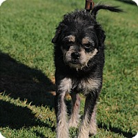 Adopt A Pet :: Bandit - Agoura Hills, CA