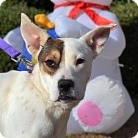 Adopt A Pet :: Madison - Acworth, GA