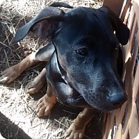 Adopt A Pet :: Albacore - Fort Collins, CO