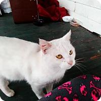 Adopt A Pet :: Romeo - Myrtle Beach, SC