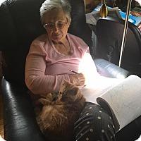 Adopt A Pet :: Petsmart Macon Kitties - McDonough, GA
