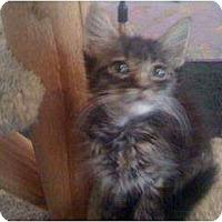 Adopt A Pet :: Felicia - Mobile, AL