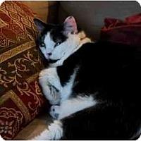 Adopt A Pet :: HANA (MG) - Little Falls, NJ