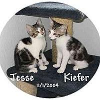 Adopt A Pet :: JESSE - AUSTIN, TX