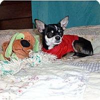 Adopt A Pet :: Santos - Mooy, AL