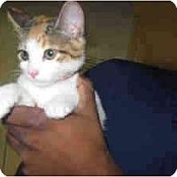 Adopt A Pet :: Skittles - Arlington, VA