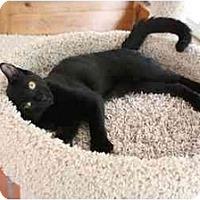 Adopt A Pet :: Chey - Bonita Springs, FL