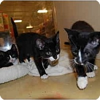 Adopt A Pet :: Flynn - Modesto, CA