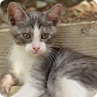Adopt A Pet :: Leonardo - North Highlands, CA