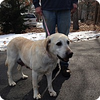 Adopt A Pet :: Blanche - South Amboy, NJ