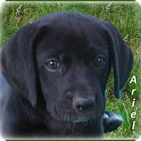 Adopt A Pet :: Ariel - ADOPTION PENDING - Marlborough, MA