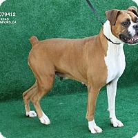 Adopt A Pet :: Delta - Reno, NV