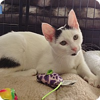 Adopt A Pet :: Dipstick - Horsham, PA
