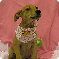 Adopt A Pet :: Keeley - Charlemont, MA