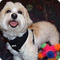 Adopt A Pet :: Benji - Hazard, KY